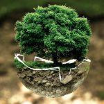 Baum der Erde